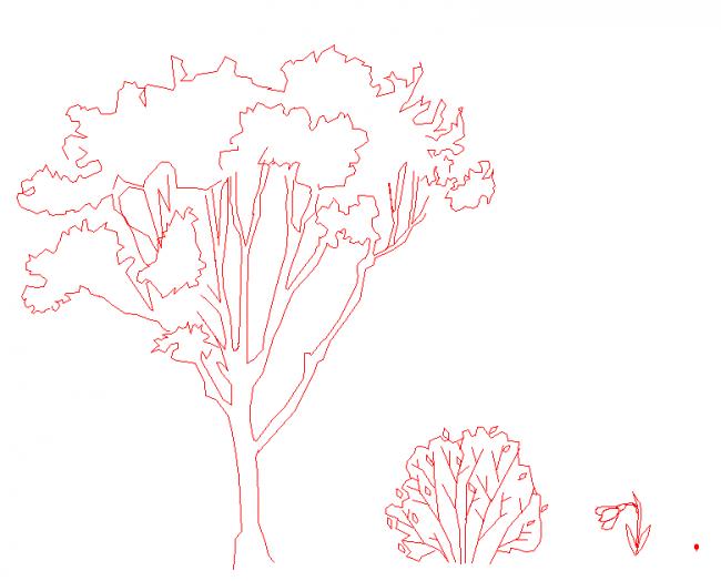 Oak tree, shrub, rose geophyte